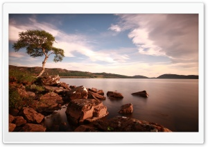 Tree & Lake HD Wide Wallpaper for Widescreen