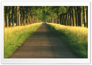 Tree Alley HD Wide Wallpaper for Widescreen