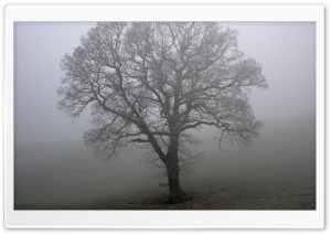 Tree And Fog HD Wide Wallpaper for Widescreen