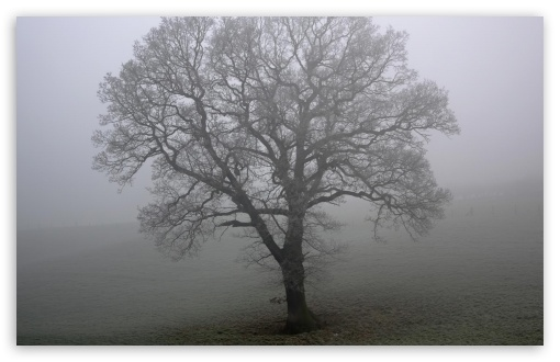 Tree And Fog HD wallpaper for Wide 16:10 5:3 Widescreen WHXGA WQXGA WUXGA WXGA WGA ; HD 16:9 High Definition WQHD QWXGA 1080p 900p 720p QHD nHD ; Standard 4:3 5:4 3:2 Fullscreen UXGA XGA SVGA QSXGA SXGA DVGA HVGA HQVGA devices ( Apple PowerBook G4 iPhone 4 3G 3GS iPod Touch ) ; Tablet 1:1 ; iPad 1/2/Mini ; Mobile 4:3 5:3 3:2 16:9 5:4 - UXGA XGA SVGA WGA DVGA HVGA HQVGA devices ( Apple PowerBook G4 iPhone 4 3G 3GS iPod Touch ) WQHD QWXGA 1080p 900p 720p QHD nHD QSXGA SXGA ;