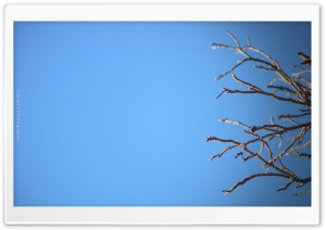 Tree and Sky HD Wide Wallpaper for Widescreen