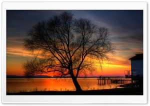 Tree And Sunset, HDR HD Wide Wallpaper for 4K UHD Widescreen desktop & smartphone