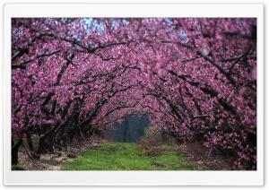 Tree Arch Ultra HD Wallpaper for 4K UHD Widescreen desktop, tablet & smartphone