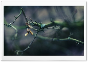 Tree Branch, Bokeh HD Wide Wallpaper for Widescreen