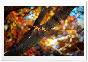 Tree Branch Bokeh HD Wide Wallpaper for 4K UHD Widescreen desktop & smartphone