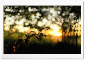 Tree Branch, Bokeh HD Wide Wallpaper for 4K UHD Widescreen desktop & smartphone