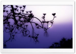 Tree Branch Silhouette at Dusk HD Wide Wallpaper for Widescreen