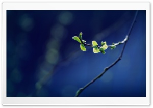 Tree Branch with Fresh Leaves HD Wide Wallpaper for Widescreen