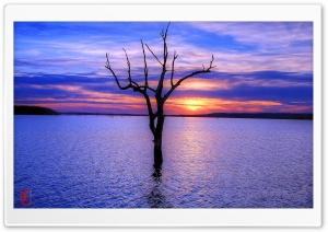 Tree, Clinton Lake HD Wide Wallpaper for Widescreen