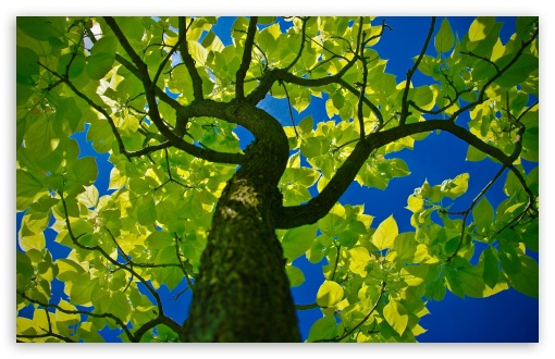 Tree Crown HD wallpaper for Standard 4:3 5:4 Fullscreen UXGA XGA SVGA QSXGA SXGA ; Wide 16:10 5:3 Widescreen WHXGA WQXGA WUXGA WXGA WGA ; HD 16:9 High Definition WQHD QWXGA 1080p 900p 720p QHD nHD ; Other 3:2 DVGA HVGA HQVGA devices ( Apple PowerBook G4 iPhone 4 3G 3GS iPod Touch ) ; Mobile VGA WVGA iPhone iPad PSP Phone - VGA QVGA Smartphone ( PocketPC GPS iPod Zune BlackBerry HTC Samsung LG Nokia Eten Asus ) WVGA WQVGA Smartphone ( HTC Samsung Sony Ericsson LG Vertu MIO ) HVGA Smartphone ( Apple iPhone iPod BlackBerry HTC Samsung Nokia ) Sony PSP Zune HD Zen ; Tablet 2 Android 3 DVGA HVGA HQVGA devices ( Apple PowerBook G4 iPhone 4 3G 3GS iPod Touch ) ;