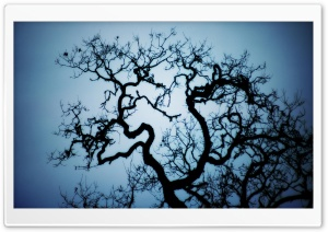 Tree Crown Blue Sky HD Wide Wallpaper for Widescreen
