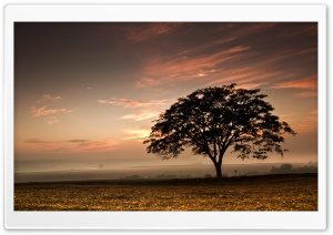 Tree, Evening HD Wide Wallpaper for Widescreen