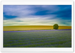 Tree Field HD Wide Wallpaper for Widescreen