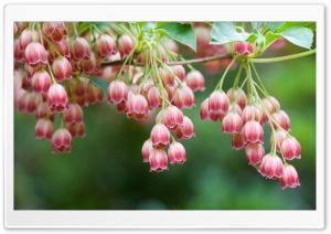 Tree Flowers HD Wide Wallpaper for 4K UHD Widescreen desktop & smartphone