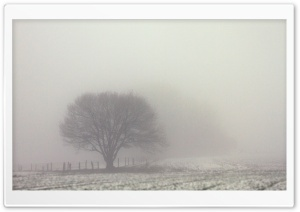 Tree, Fog, Field, Winter, Gloomy HD Wide Wallpaper for 4K UHD Widescreen desktop & smartphone