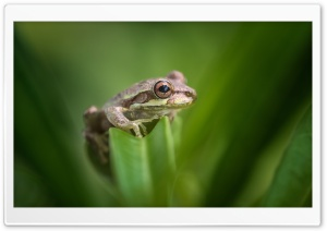 Tree Frog Habitat HD Wide Wallpaper for Widescreen