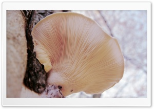 Tree Fungi HD Wide Wallpaper for Widescreen
