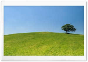Tree, Hill HD Wide Wallpaper for Widescreen