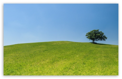 Tree, Hill ❤ 4K UHD Wallpaper for Wide 16:10 5:3 Widescreen WHXGA WQXGA WUXGA WXGA WGA ; 4K UHD 16:9 Ultra High Definition 2160p 1440p 1080p 900p 720p ; UHD 16:9 2160p 1440p 1080p 900p 720p ; Standard 4:3 5:4 3:2 Fullscreen UXGA XGA SVGA QSXGA SXGA DVGA HVGA HQVGA ( Apple PowerBook G4 iPhone 4 3G 3GS iPod Touch ) ; Smartphone 5:3 WGA ; Tablet 1:1 ; iPad 1/2/Mini ; Mobile 4:3 5:3 3:2 16:9 5:4 - UXGA XGA SVGA WGA DVGA HVGA HQVGA ( Apple PowerBook G4 iPhone 4 3G 3GS iPod Touch ) 2160p 1440p 1080p 900p 720p QSXGA SXGA ;