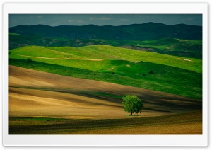 Tree in a Field, Spring Background HD Wide Wallpaper for 4K UHD Widescreen desktop & smartphone