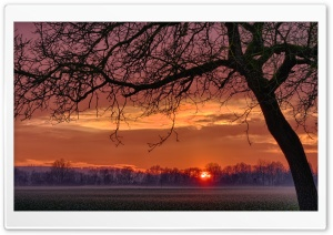 Tree In Sunset HD Wide Wallpaper for Widescreen