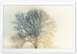 Tree in the Mist HD Wide Wallpaper for Widescreen