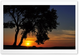 Tree In The Sunset HD Wide Wallpaper for 4K UHD Widescreen desktop & smartphone