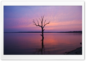 Tree In The Water HD Wide Wallpaper for Widescreen