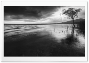 Tree In Water Black and White HD Wide Wallpaper for Widescreen