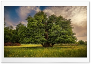 Tree, Landscape HD Wide Wallpaper for 4K UHD Widescreen desktop & smartphone
