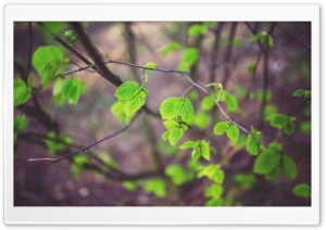 Tree Leaves HD Wide Wallpaper for Widescreen