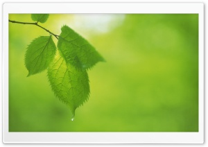 Tree Leaves 10 HD Wide Wallpaper for Widescreen