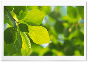 Tree Leaves 11 HD Wide Wallpaper for Widescreen