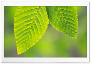 Tree Leaves 12 HD Wide Wallpaper for Widescreen