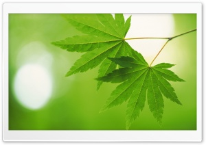 Tree Leaves 5 HD Wide Wallpaper for 4K UHD Widescreen desktop & smartphone