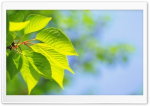Tree Leaves 6 HD Wide Wallpaper for Widescreen