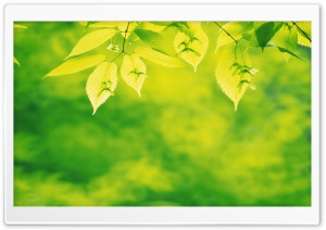 Tree Leaves 7 HD Wide Wallpaper for Widescreen