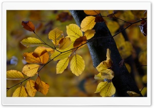Tree Leaves, Autumn HD Wide Wallpaper for Widescreen