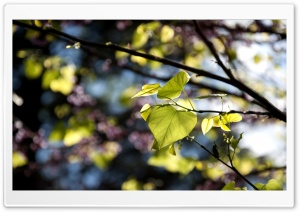 Tree Leaves Bokeh HD Wide Wallpaper for Widescreen