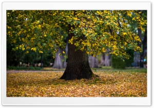 Tree, Leaves, Foliage, Autumn Ultra HD Wallpaper for 4K UHD Widescreen desktop, tablet & smartphone