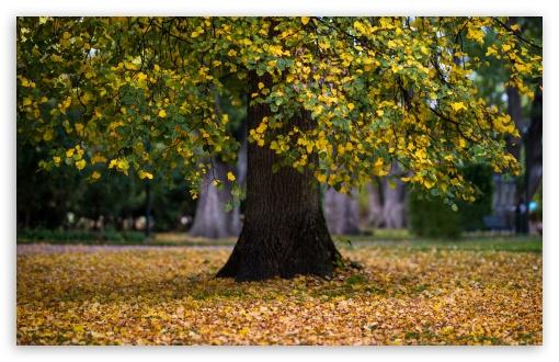 Tree, Leaves, Foliage, Autumn UltraHD Wallpaper for Wide 16:10 5:3 Widescreen WHXGA WQXGA WUXGA WXGA WGA ; UltraWide 21:9 24:10 ; 8K UHD TV 16:9 Ultra High Definition 2160p 1440p 1080p 900p 720p ; UHD 16:9 2160p 1440p 1080p 900p 720p ; Standard 4:3 5:4 3:2 Fullscreen UXGA XGA SVGA QSXGA SXGA DVGA HVGA HQVGA ( Apple PowerBook G4 iPhone 4 3G 3GS iPod Touch ) ; Smartphone 16:9 3:2 5:3 2160p 1440p 1080p 900p 720p DVGA HVGA HQVGA ( Apple PowerBook G4 iPhone 4 3G 3GS iPod Touch ) WGA ; Tablet 1:1 ; iPad 1/2/Mini ; Mobile 4:3 5:3 3:2 16:9 5:4 - UXGA XGA SVGA WGA DVGA HVGA HQVGA ( Apple PowerBook G4 iPhone 4 3G 3GS iPod Touch ) 2160p 1440p 1080p 900p 720p QSXGA SXGA ;