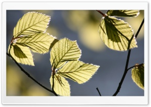 Tree Leaves In Sunlight HD Wide Wallpaper for 4K UHD Widescreen desktop & smartphone