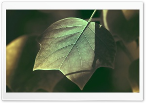 Tree Leaves Macro HD Wide Wallpaper for Widescreen