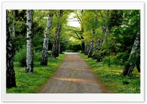 Tree Lined Dirt Road HD Wide Wallpaper for Widescreen