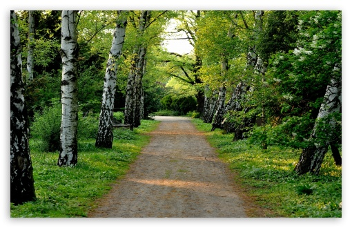 Tree Lined Dirt Road HD wallpaper for Wide 16:10 5:3 Widescreen WHXGA WQXGA WUXGA WXGA WGA ; HD 16:9 High Definition WQHD QWXGA 1080p 900p 720p QHD nHD ; Standard 4:3 5:4 3:2 Fullscreen UXGA XGA SVGA QSXGA SXGA DVGA HVGA HQVGA devices ( Apple PowerBook G4 iPhone 4 3G 3GS iPod Touch ) ; Tablet 1:1 ; iPad 1/2/Mini ; Mobile 4:3 5:3 3:2 16:9 5:4 - UXGA XGA SVGA WGA DVGA HVGA HQVGA devices ( Apple PowerBook G4 iPhone 4 3G 3GS iPod Touch ) WQHD QWXGA 1080p 900p 720p QHD nHD QSXGA SXGA ; Dual 4:3 5:4 UXGA XGA SVGA QSXGA SXGA ;