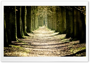 Tree Lined Path HD Wide Wallpaper for Widescreen