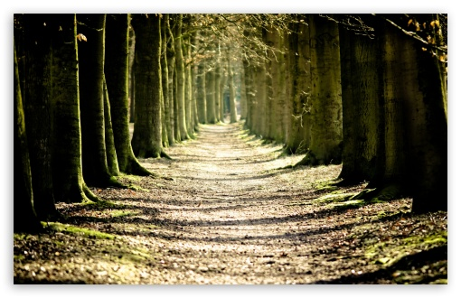 Tree Lined Path ❤ 4K UHD Wallpaper for Wide 16:10 5:3 Widescreen WHXGA WQXGA WUXGA WXGA WGA ; 4K UHD 16:9 Ultra High Definition 2160p 1440p 1080p 900p 720p ; Standard 4:3 5:4 3:2 Fullscreen UXGA XGA SVGA QSXGA SXGA DVGA HVGA HQVGA ( Apple PowerBook G4 iPhone 4 3G 3GS iPod Touch ) ; Tablet 1:1 ; iPad 1/2/Mini ; Mobile 4:3 5:3 3:2 16:9 5:4 - UXGA XGA SVGA WGA DVGA HVGA HQVGA ( Apple PowerBook G4 iPhone 4 3G 3GS iPod Touch ) 2160p 1440p 1080p 900p 720p QSXGA SXGA ; Dual 5:4 QSXGA SXGA ;