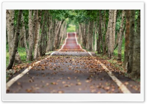 Tree-lined Road HD Wide Wallpaper for Widescreen