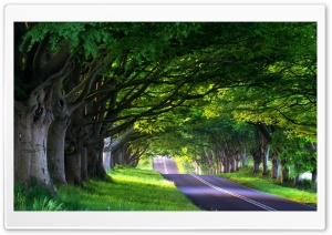 Tree Lined Street HD Wide Wallpaper for Widescreen