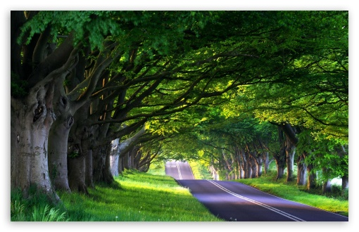 Tree Lined Street HD wallpaper for Wide 16:10 5:3 Widescreen WHXGA WQXGA WUXGA WXGA WGA ; HD 16:9 High Definition WQHD QWXGA 1080p 900p 720p QHD nHD ; Standard 4:3 5:4 Fullscreen UXGA XGA SVGA QSXGA SXGA ; MS 3:2 DVGA HVGA HQVGA devices ( Apple PowerBook G4 iPhone 4 3G 3GS iPod Touch ) ; Mobile VGA WVGA iPhone iPad PSP Phone - VGA QVGA Smartphone ( PocketPC GPS iPod Zune BlackBerry HTC Samsung LG Nokia Eten Asus ) WVGA WQVGA Smartphone ( HTC Samsung Sony Ericsson LG Vertu MIO ) HVGA Smartphone ( Apple iPhone iPod BlackBerry HTC Samsung Nokia ) Sony PSP Zune HD Zen ; Tablet 1&2 Android ; Dual 4:3 5:4 16:10 5:3 16:9 UXGA XGA SVGA QSXGA SXGA WHXGA WQXGA WUXGA WXGA WGA WQHD QWXGA 1080p 900p 720p QHD nHD ;